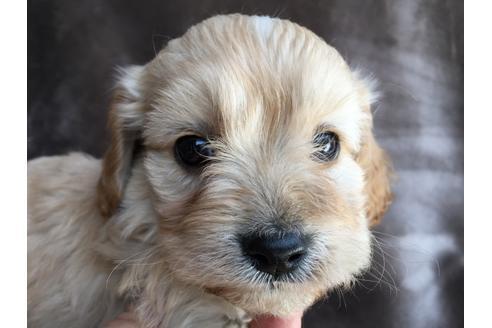 販売中の茨城県のミックス犬の5枚目