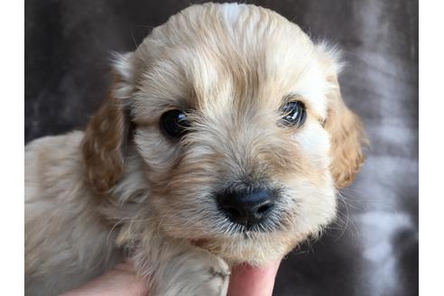 販売中の茨城県のミックス犬の4枚目