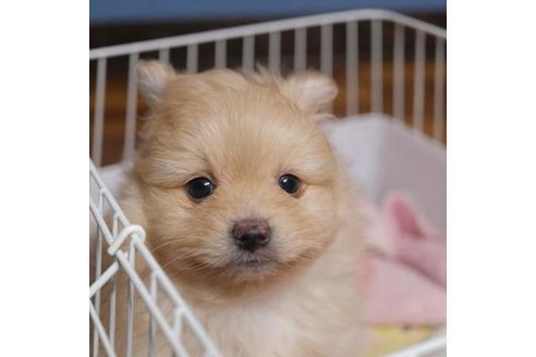 成約済の愛媛県のミックス犬の1枚目