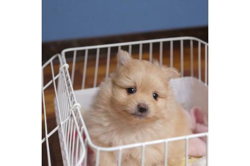 成約済の愛媛県のミックス犬の6枚目
