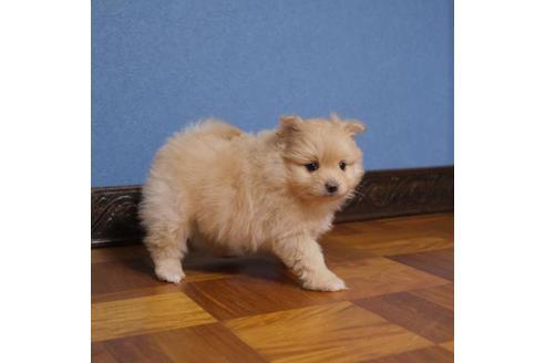 成約済の愛媛県のミックス犬の5枚目
