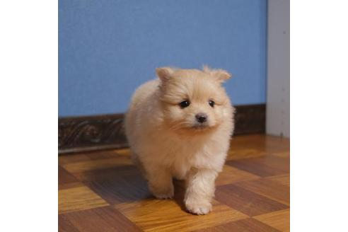成約済の愛媛県のミックス犬の2枚目
