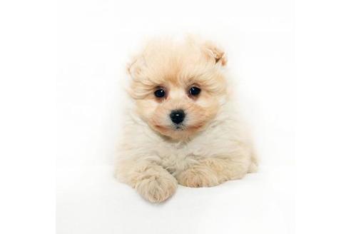 成約済の熊本県のミックス犬の1枚目