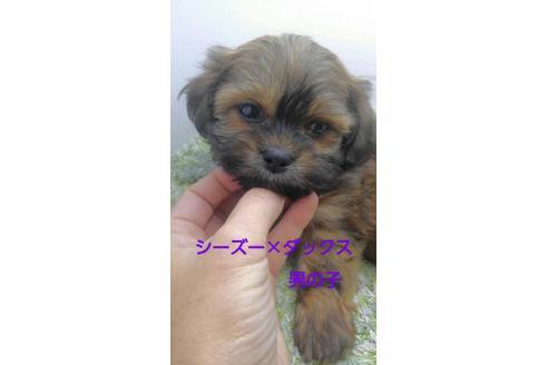 成約済の宮崎県のミックス犬の1枚目