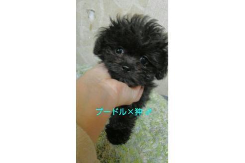 販売中の宮崎県のミックス犬の3枚目