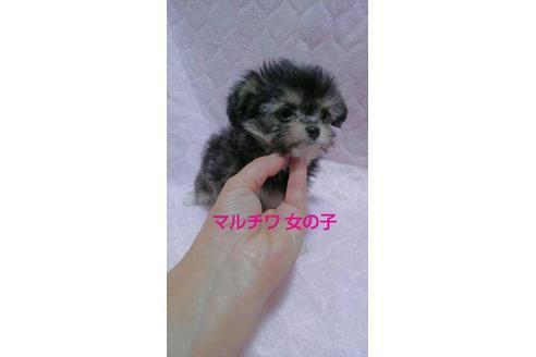 成約済の宮崎県のミックス犬の2枚目