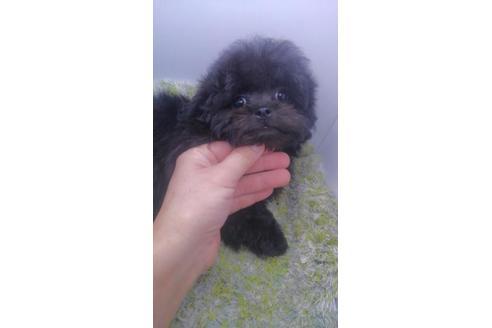 販売中の宮崎県のミックス犬の1枚目