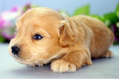 販売中の愛知県のミックス犬の5枚目