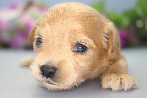 販売中の愛知県のミックス犬の4枚目