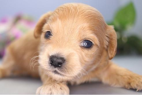 販売中の愛知県のミックス犬の3枚目
