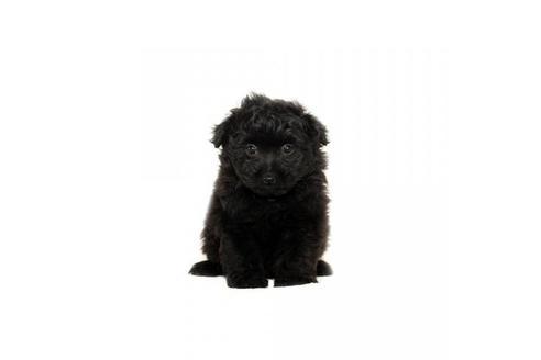 成約済の熊本県のミックス犬の2枚目