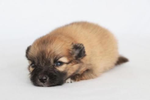 成約済の神奈川県のミックス犬の14枚目