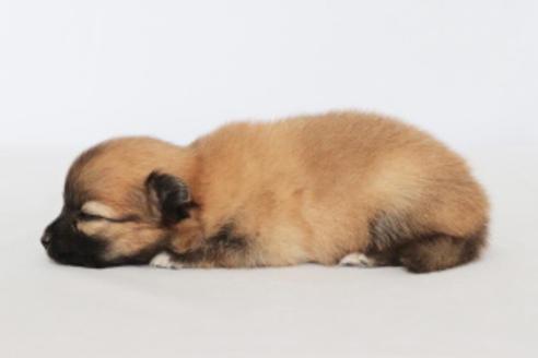 成約済の神奈川県のミックス犬の13枚目
