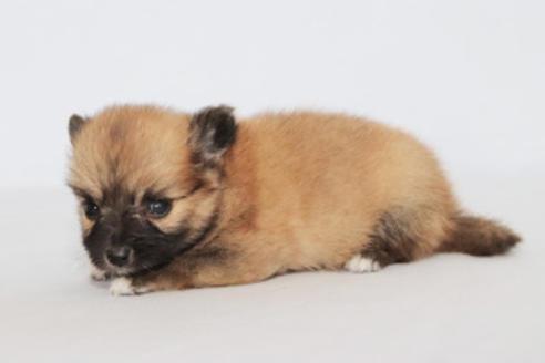 成約済の神奈川県のミックス犬の12枚目