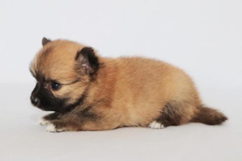 成約済の神奈川県のミックス犬の11枚目
