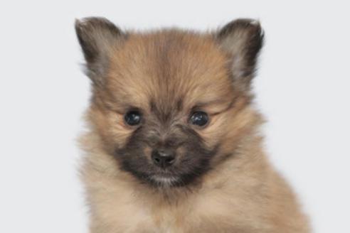 成約済の神奈川県のミックス犬の9枚目