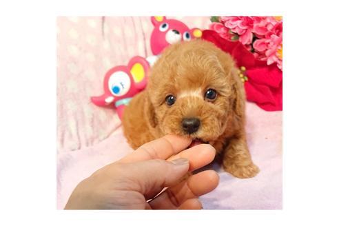 販売中の静岡県のミックス犬の5枚目