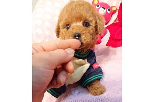 販売中の静岡県のミックス犬の2枚目
