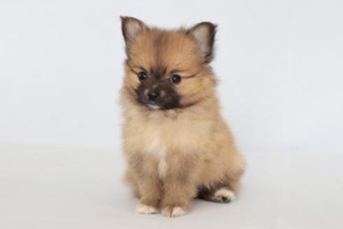 成約済の神奈川県のミックス犬の7枚目