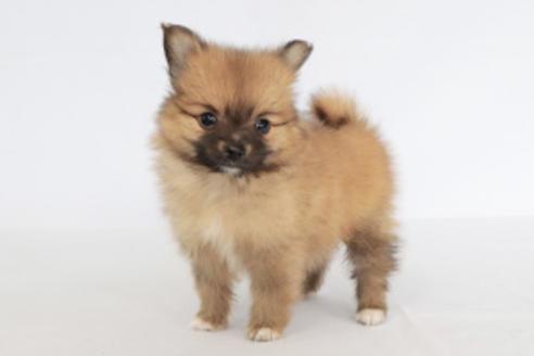 成約済の神奈川県のミックス犬の6枚目