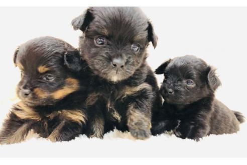 成約済の京都府のミックス犬の13枚目