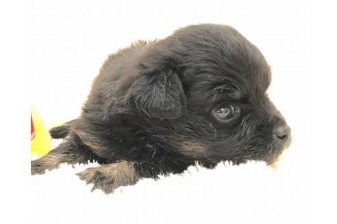 成約済の京都府のミックス犬の11枚目