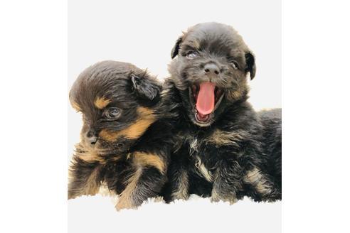 成約済の京都府のミックス犬の10枚目