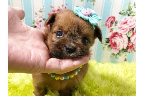 成約済の秋田県のミックス犬の1枚目