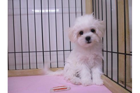 成約済の鳥取県のミックス犬の3枚目