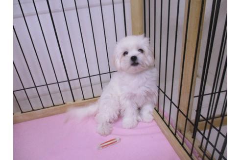 成約済の鳥取県のミックス犬の2枚目