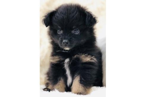成約済の京都府のミックス犬の5枚目