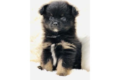 成約済の京都府のミックス犬の4枚目