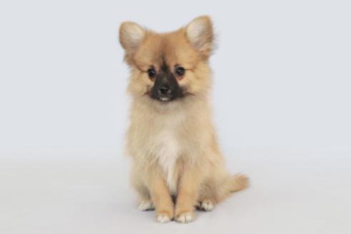 成約済の神奈川県のミックス犬の4枚目