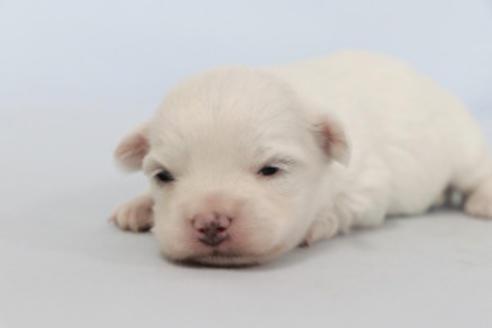 成約済の神奈川県のミックス犬の8枚目