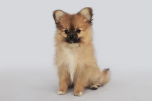 成約済の神奈川県のミックス犬の1枚目