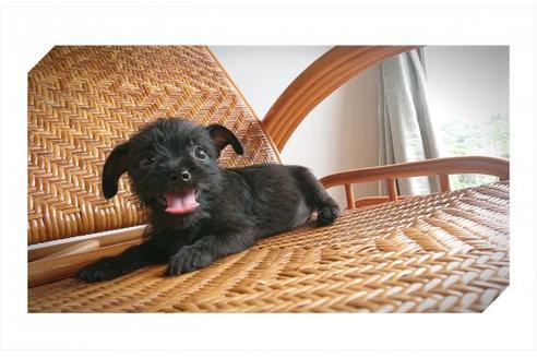 販売中の岡山県のミックス犬の3枚目