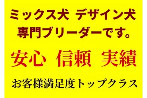 成約済の秋田県のミックス犬の3枚目