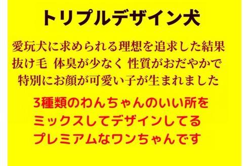 成約済の秋田県のミックス犬の4枚目