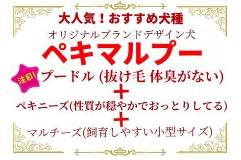 成約済の秋田県のマルプーの9枚目