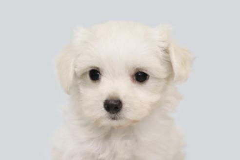 成約済の神奈川県のミックス犬の5枚目