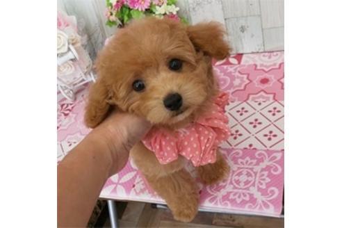 成約済の香川県のミックス犬の3枚目