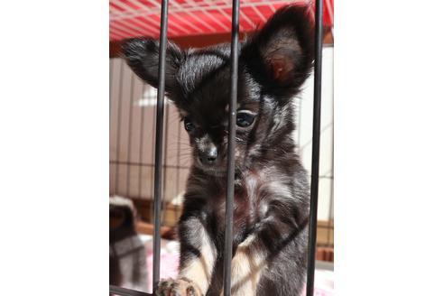 成約済の北海道のミックス犬の3枚目
