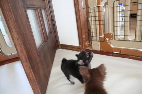 成約済の北海道のミックス犬の2枚目