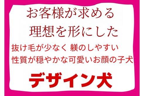 成約済の秋田県のミックス犬の16枚目
