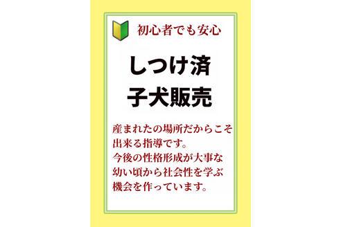 成約済の秋田県のミックス犬の11枚目