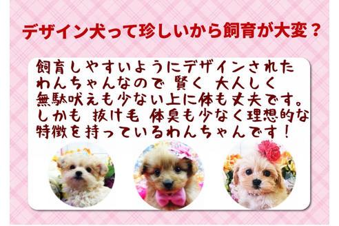 成約済の秋田県のミックス犬の9枚目
