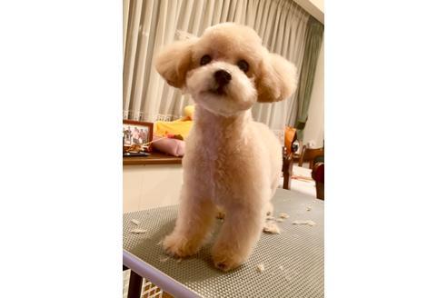 成約済の東京都のミックス犬の14枚目