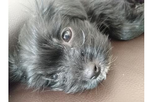 成約済の静岡県のミックス犬の2枚目