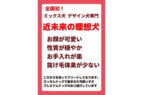 成約済の秋田県のチワプーの8枚目