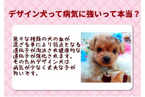 成約済の秋田県のミックス犬の6枚目